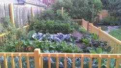 Cassandra's garden during the 2012 early summer season.